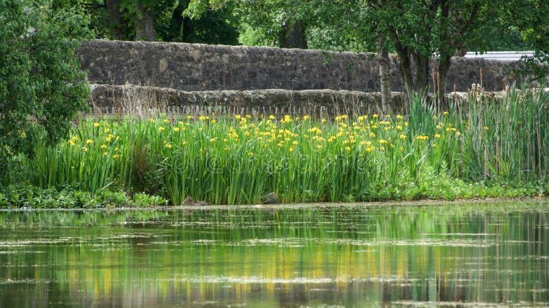 Dorfteich mit gelben Blumen stockfoto