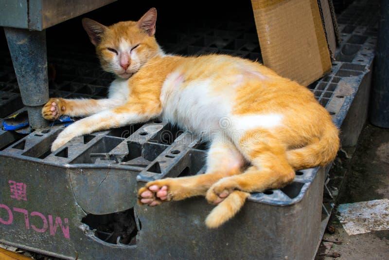 Dormilón Tabby Cat amarilla fotos de archivo