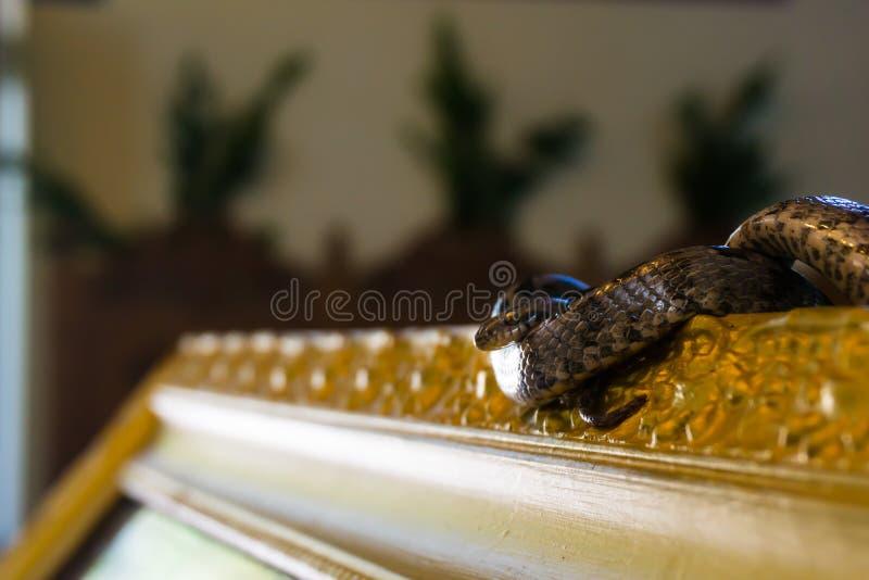 Dormition dzień maryja dziewica, Sierpień 15th w Arginia wiosce w Kefalonia Grecja zdjęcia stock