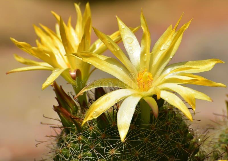 Dorn und Blume lizenzfreie stockfotografie