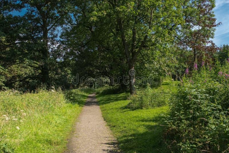 Dorośleć Szkockich drzewa w lecie i Footpath bieg przez centre wizerunek obrazy royalty free
