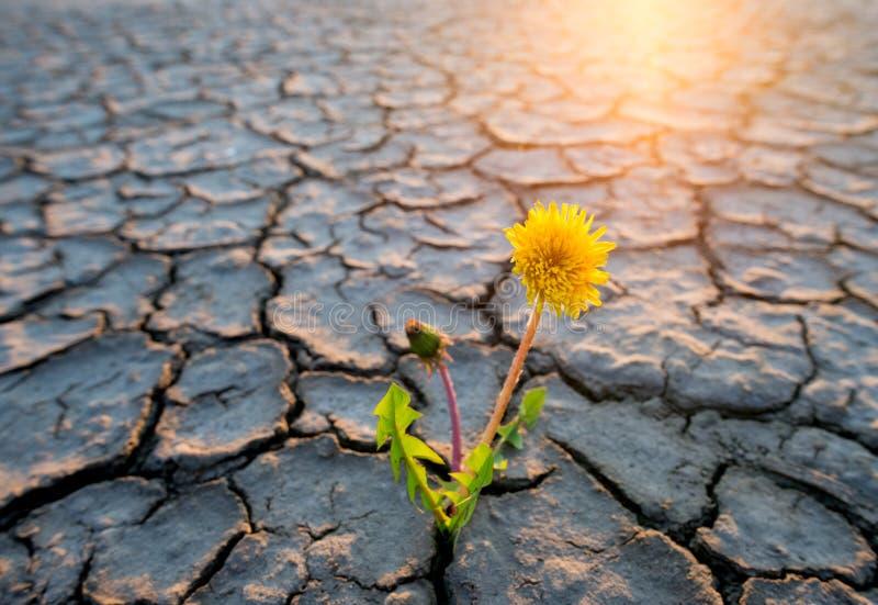 dorośnięcie pustynna roślina obrazy royalty free