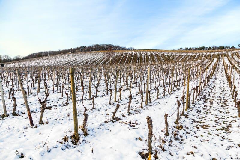 Dorośnięcie teren blisko Kloster Eberbach zakrywający z śniegiem zdjęcie stock