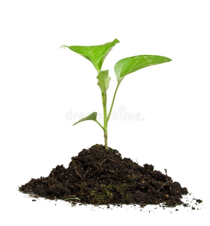 dorośnięcie zielona roślina zdjęcia stock