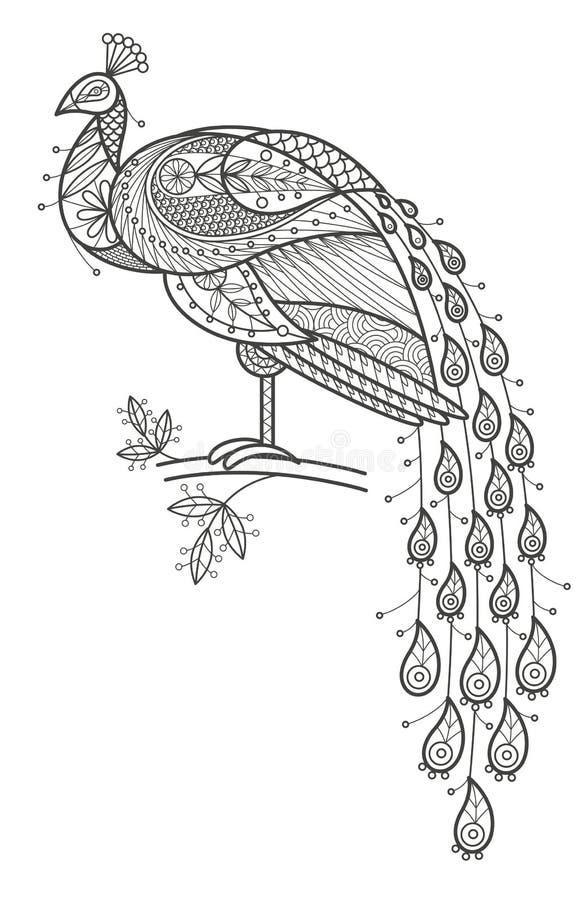 Dorosła kolorystyka - paw royalty ilustracja
