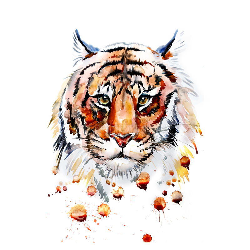 Dorosła tygrysia grafika, wektor ilustracji