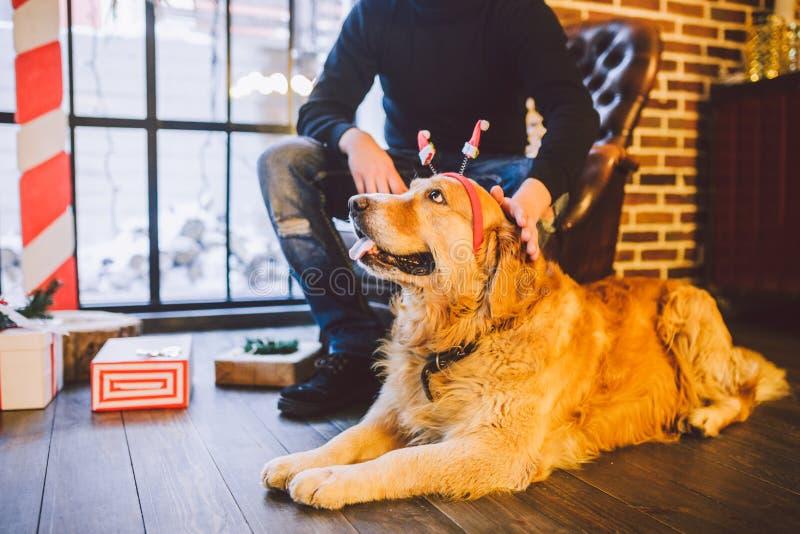 Dorosłego pies golden retriever, abrador kłama obok właściciela ` s nóg męski rozpłodnik We wnętrzu domu na a zdjęcie royalty free