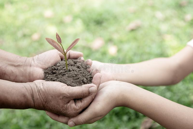 Dorosli trzyma kuli ziemskiej i dziecka r?k? trzyma ma?ej rozsady, zasadzaj? drzewa, zmniejszaj? globalne ocieplenie, ?wiatowego  zdjęcia stock