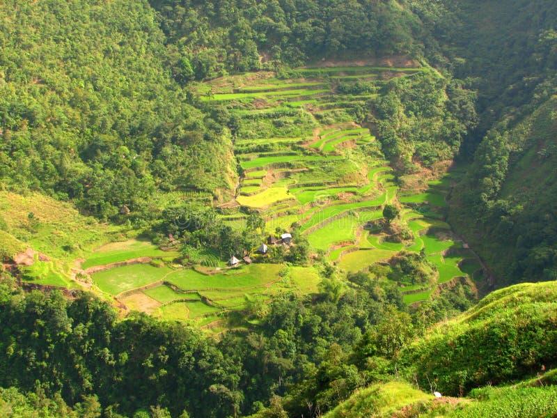 Dorp 2 van de Terrassen van de Rijst van Ifugao stock foto's