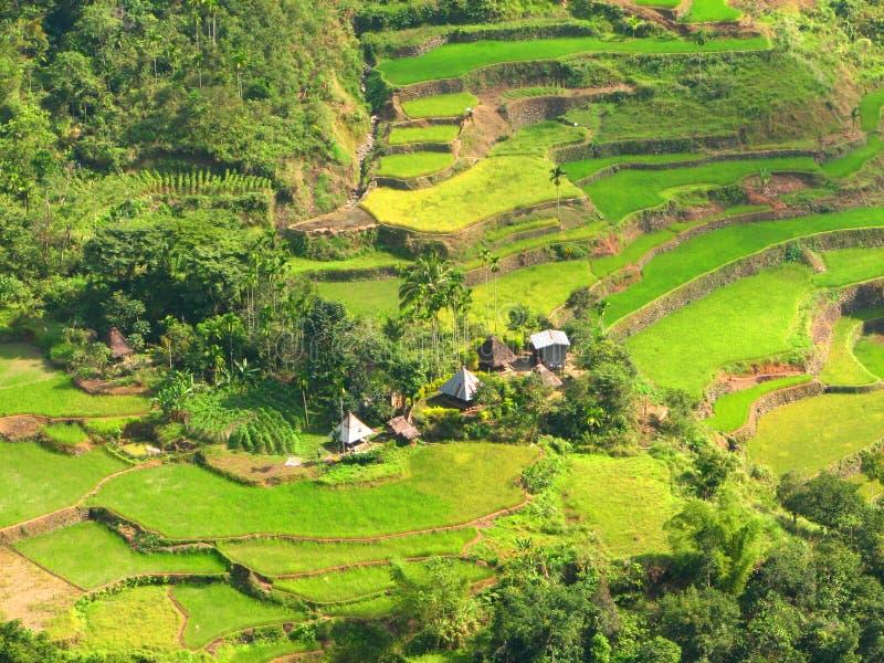 Dorp 3 van de Terrassen van de Rijst van Ifugao stock foto