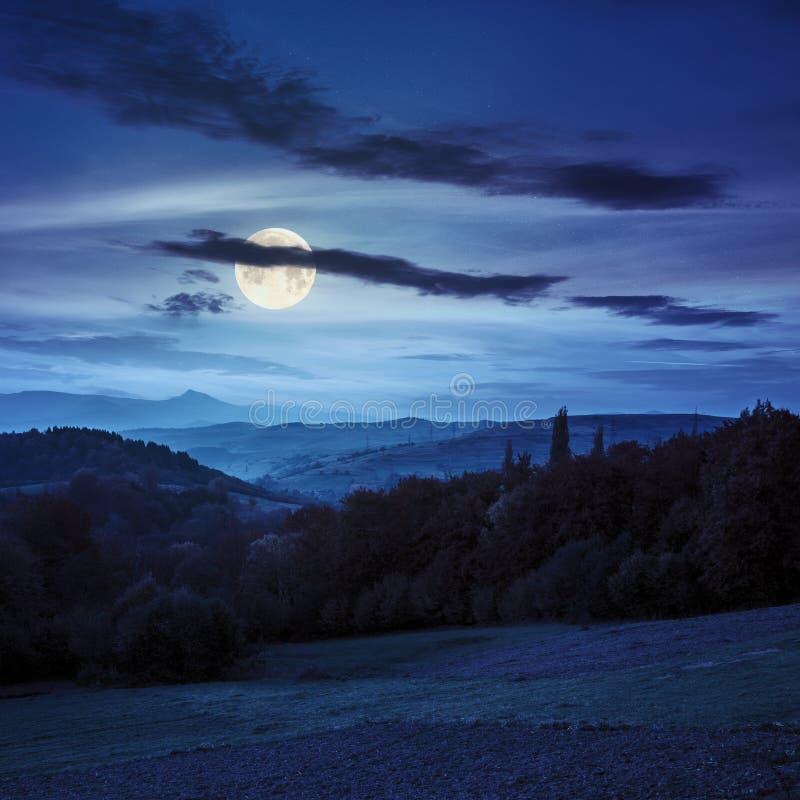 Dorp op helling achter bos in mountainl bij nacht stock fotografie