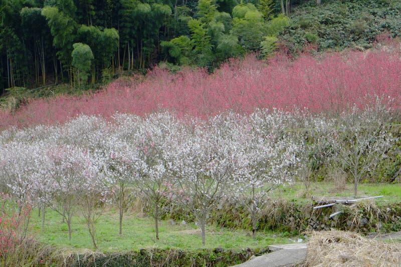 Dorp van ontvolking in Shimane-ounau-machi stock afbeelding
