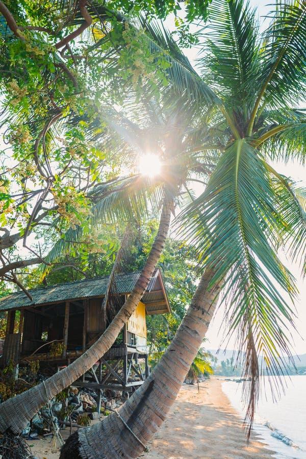 Dorpshut op het strand Exotische houten hut onderaan kokosnotenpalmen Huisvesting voor downshifter Zonlichtonderbrekingen door stock foto's