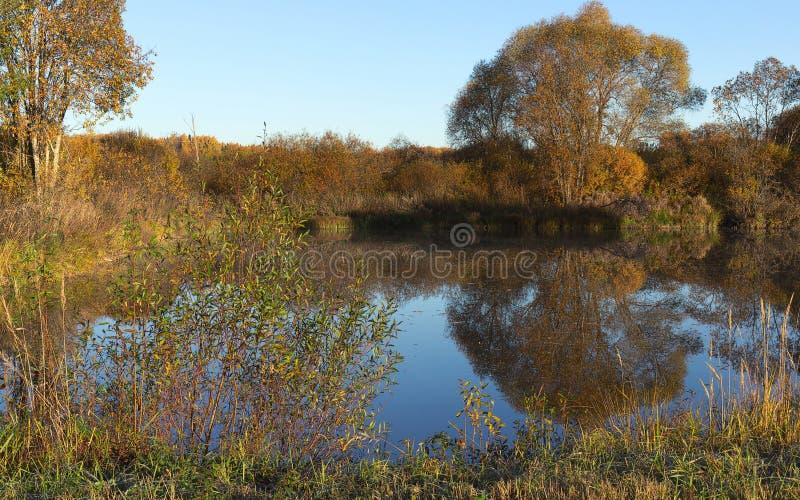Dorpsvijver en vegetatie rond het De gouden Herfst Ijzige zon royalty-vrije stock afbeelding