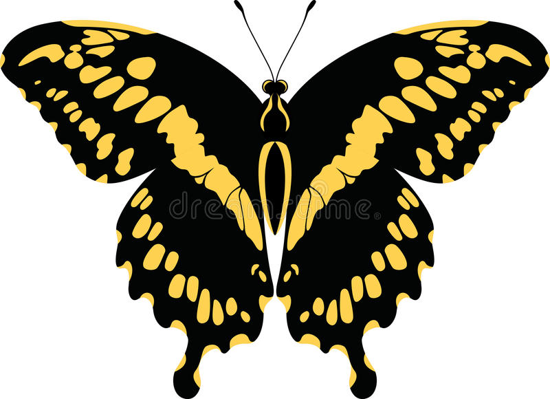 Dorsal view of vector Giant Swallowtail Butterfly Papilio Cresphontes stock illustration