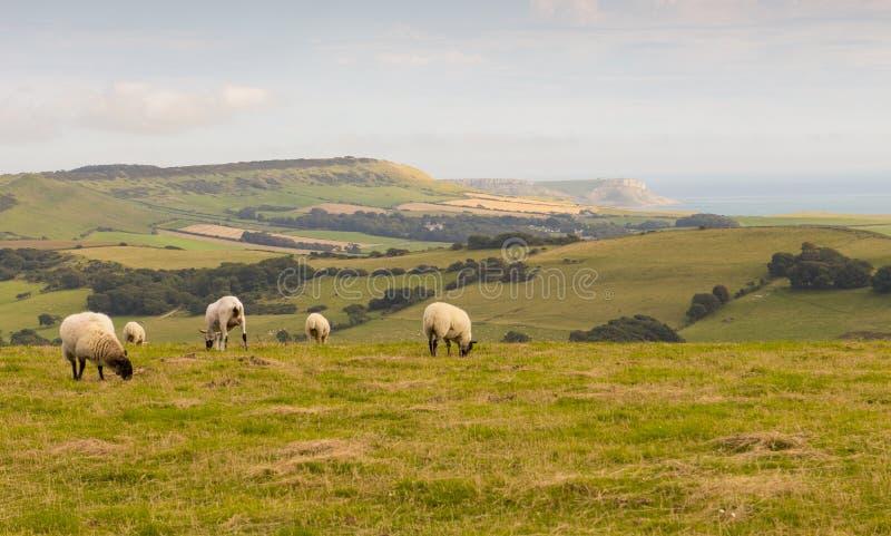 Dorset brzegowy UK fotografia royalty free