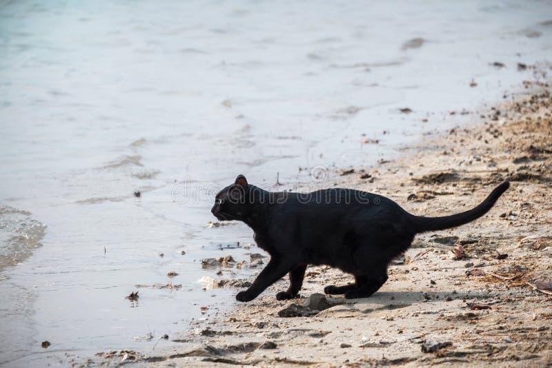 Dorstig katten drinkwater in het reservoir royalty-vrije stock afbeeldingen