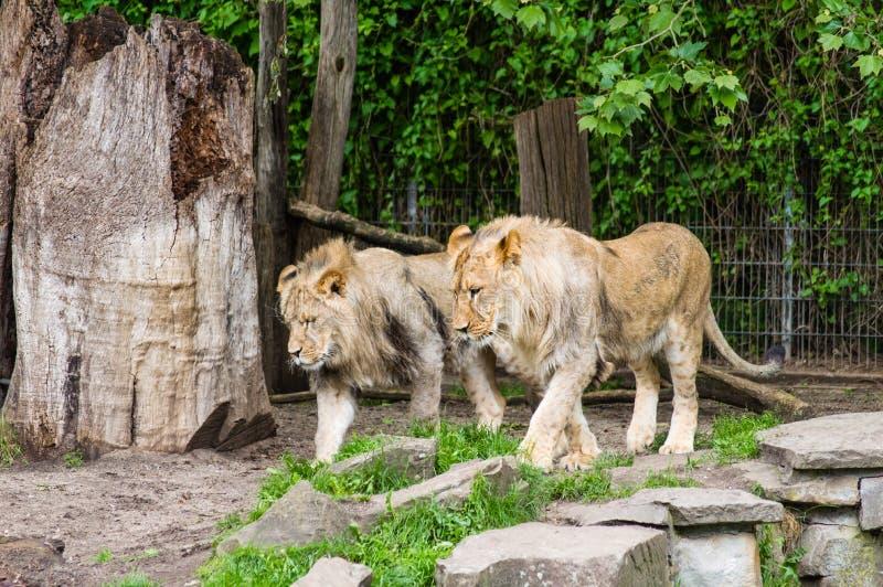 Dortmund Zoo stock image