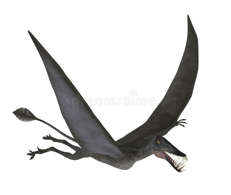 Dorygnathus Flying Royalty Free Stock Photos
