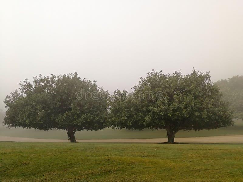 Dos árboles fotografía de archivo