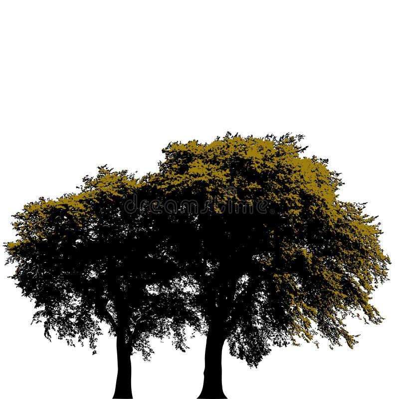 Dos árboles aislados en blanco libre illustration