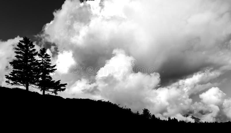 Dos árboles de pino solitarios en el horizonte debajo de un cielo nublado salvaje y expresivo imagen de archivo libre de regalías