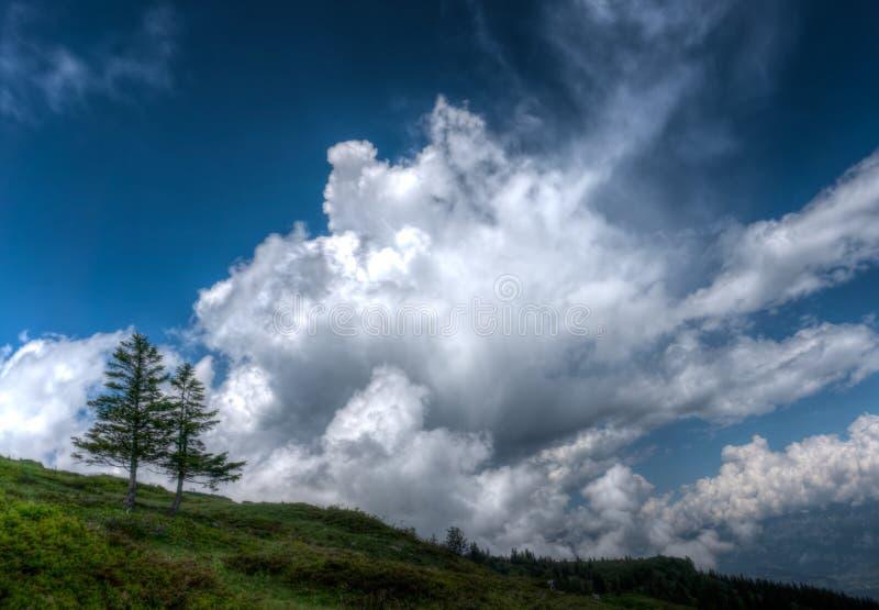Dos árboles de pino solitarios en el horizonte debajo de un cielo nublado salvaje y expresivo imágenes de archivo libres de regalías