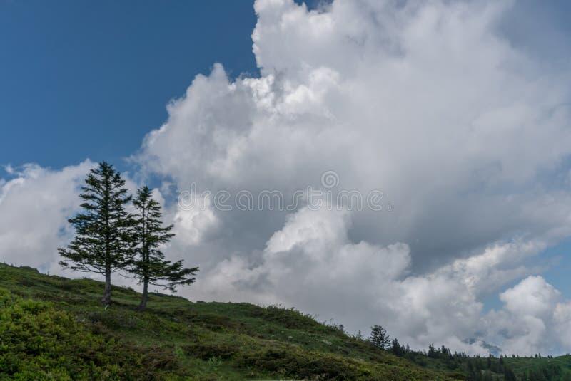 Dos árboles de pino solitarios en el horizonte debajo de un cielo nublado salvaje y expresivo foto de archivo