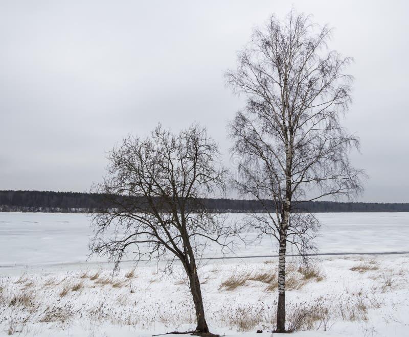 Dos árboles sin las hojas en el fondo de un río congelado foto de archivo
