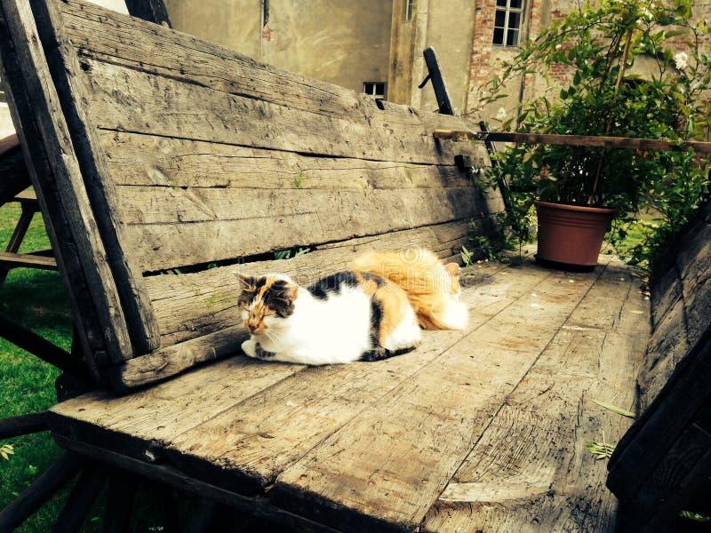dos abandonaron los gatos que dormían en un carro de madera viejo afuera foto de archivo libre de regalías