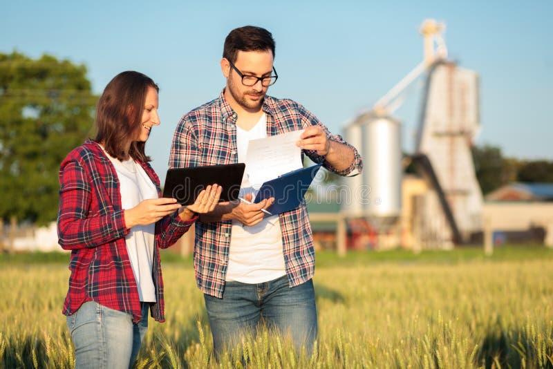 Dos agrónomos jovenes o granjeros de sexo femenino y de sexo masculino que examinan campos de trigo antes de la cosecha imagenes de archivo