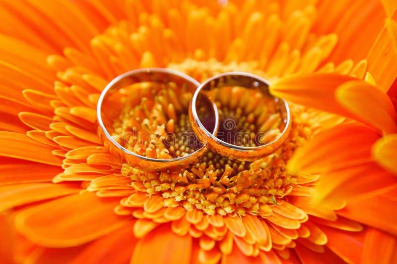 Dos anillos de bodas del oro en un gerbera anaranjado imagen de archivo