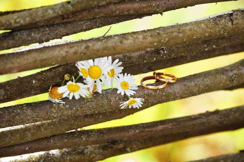Dos anillos de bodas en una vid ramifican con las margaritas de las flores fotos de archivo