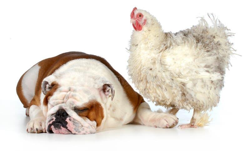Dos animales imagen de archivo libre de regalías