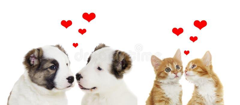 Dos animales, día de tarjetas del día de San Valentín imágenes de archivo libres de regalías