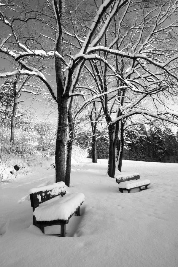 Dos Bancos Solos Cubiertos En Nieve Imagen de archivo - Imagen de ...