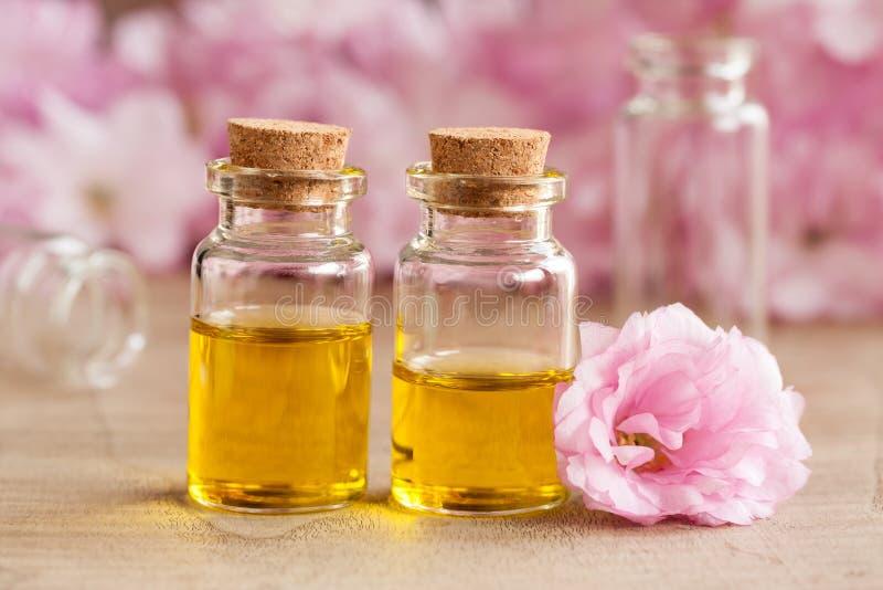 Dos botellas de aceite esencial con las flores de cerezo japonesas rosadas en el fondo imágenes de archivo libres de regalías