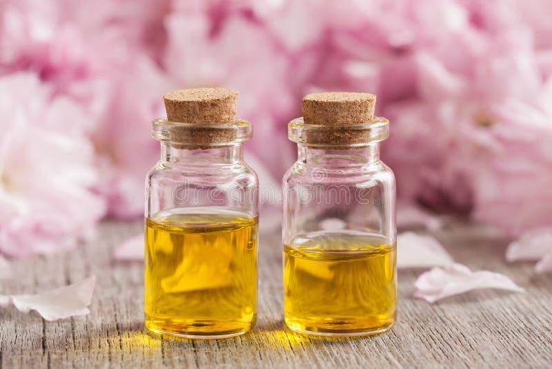 Dos botellas de aceite esencial con las flores de cerezo rosadas en el fondo imagen de archivo