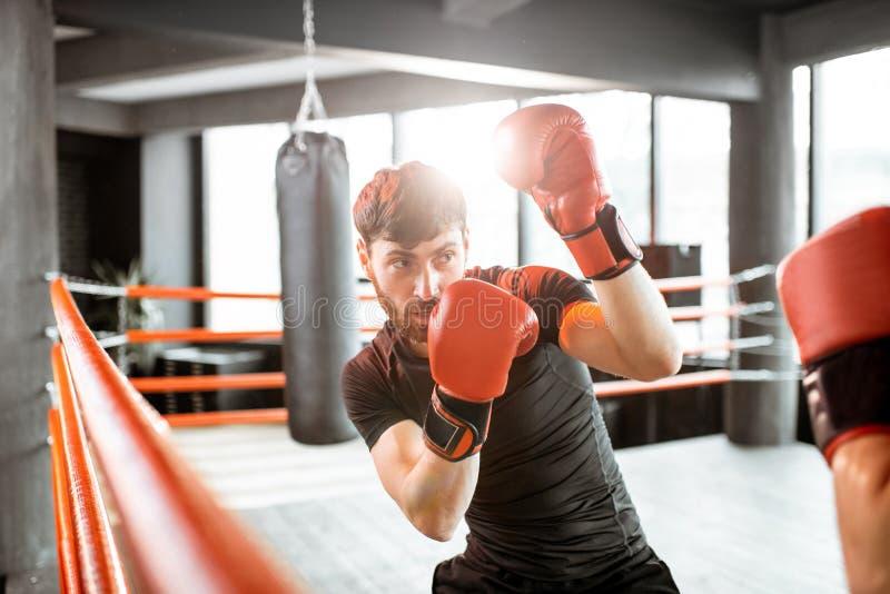 Dos boxeadores profesionales que luchan en el gimnasio imágenes de archivo libres de regalías