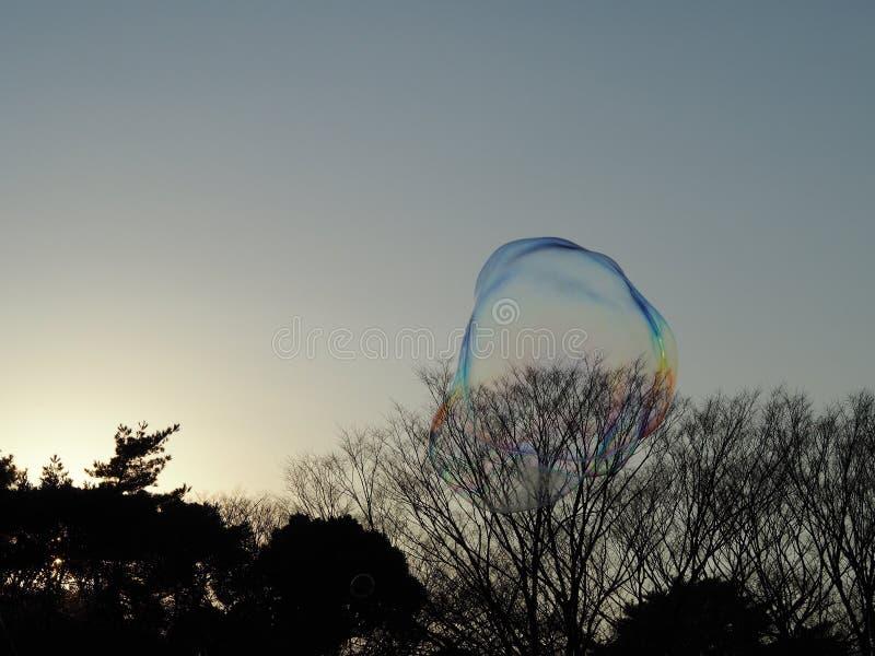 Dos burbujas temblorosas grandes en la luz del sol sobre el parque, reflejando un arco iris de colores y apenas estallar alrededo imagen de archivo libre de regalías