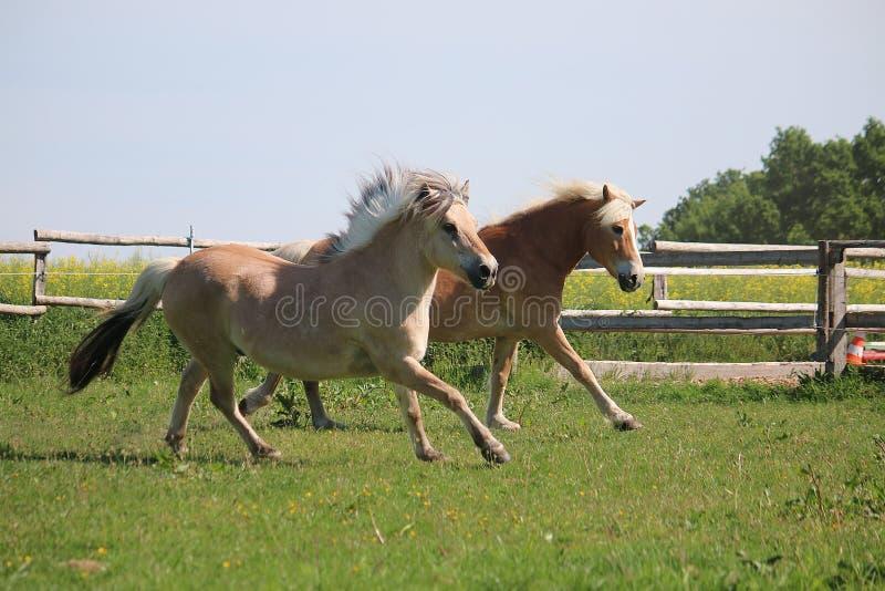Dos caballos corrientes fotos de archivo libres de regalías