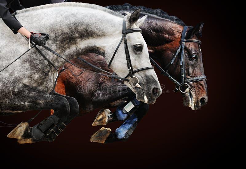 Dos caballos en la demostración de salto, en fondo marrón foto de archivo
