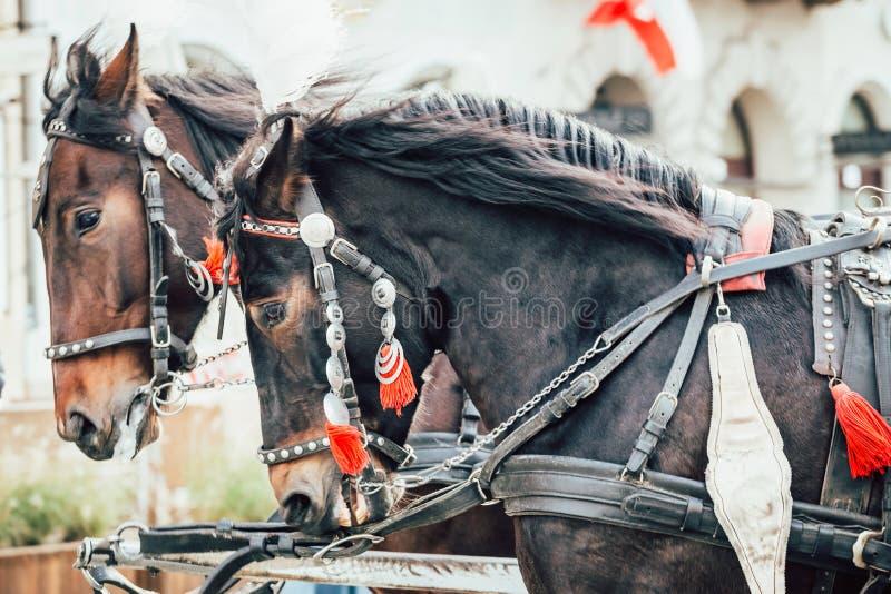 Dos caballos enjaezados al carro imagenes de archivo