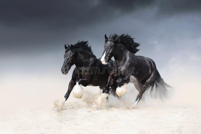 Dos caballos negros de la roca de Shail compiten con a lo largo de la arena contra el cielo fotos de archivo
