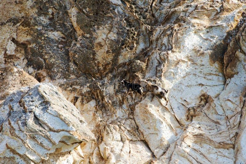 Dos cabras de montaña en el paisaje rocoso de una isla en Grecia fotografía de archivo libre de regalías