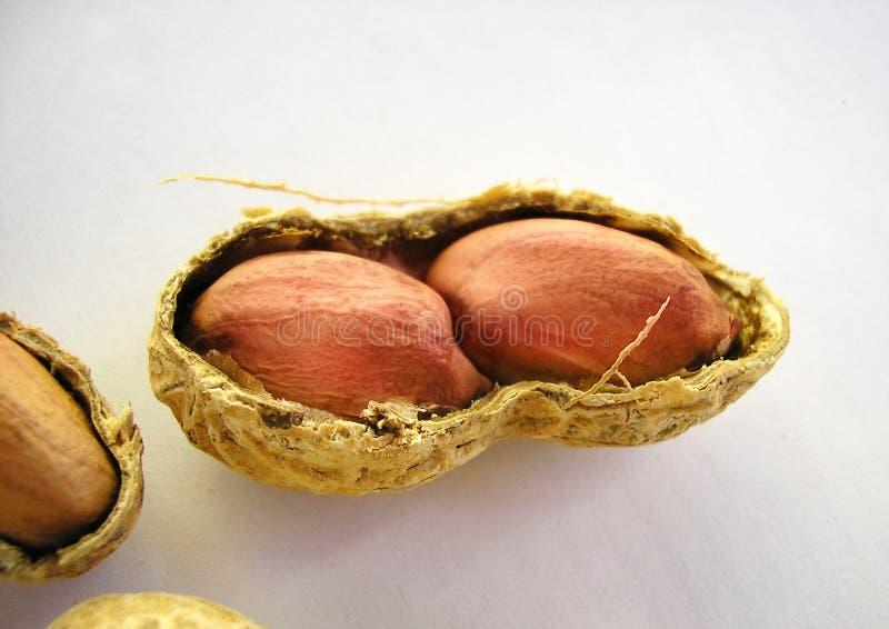 Dos cacahuetes en un shell imagenes de archivo