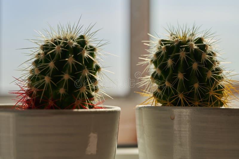 Dos cactus en potes de cer?mica en el alf?izar foto de archivo libre de regalías
