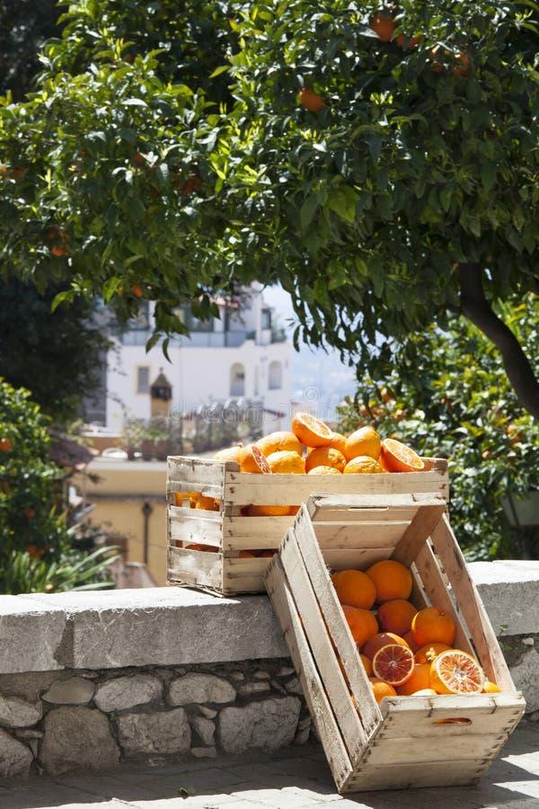 Dos cajas de los cajones con las naranjas y árboles anaranjados en el camino imágenes de archivo libres de regalías