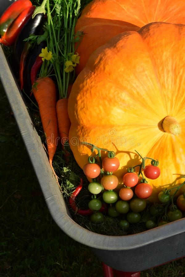 Dos calabazas grandes rodeadas por las verduras en una carretilla del hierro imágenes de archivo libres de regalías