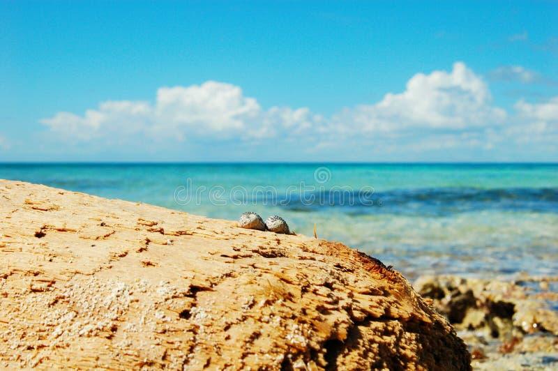 Dos caracoles de mar en la playa contra el océano fotografía de archivo libre de regalías